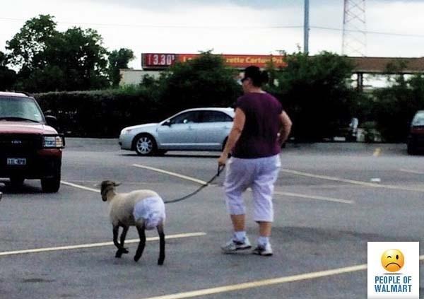 Dog - 13.30 rette CartP ITn PEOPLE OF WALMART