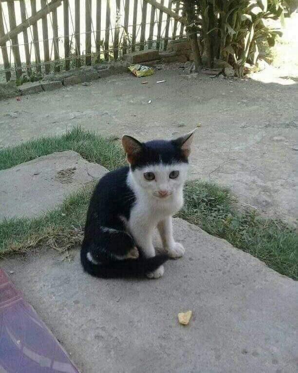 cat cute funny - 9246773760