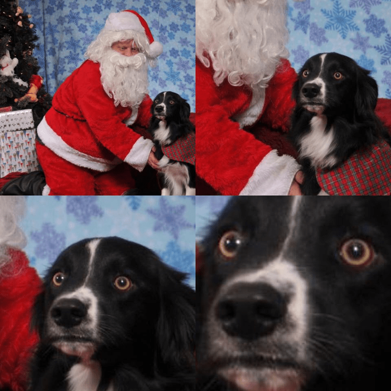 dogs doggo santa claus funny - 9246775040