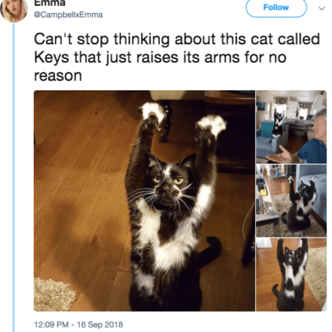 Cat - Emma Follow eCampbellxEmma Can't stop thinking about this cat called Keys that just raises its arms for no reason 12:09 PM -16 Sep 2018