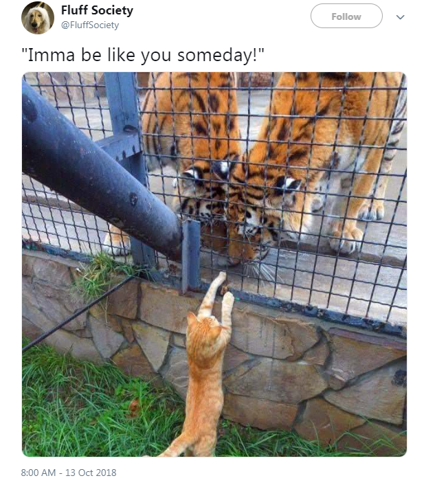 "Felidae - Fluff Society Follow @FluffSociety ""Imma be like you someday!"" 8:00 AM 13 Oct 2018"