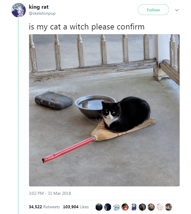 Product - king rat Follow @skeletonpup is my cat a witch please confirm 3:02 PM 31 Mar 2018 34,522 Retweets 103,904 Likes