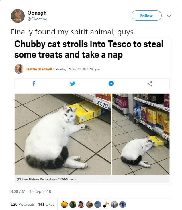 Cat - Follow Oonagh @Okeating Chubby cat strolls into Tesco to steal some treats and take a nap Finally found my spirit animal, guys. Hattie Gladwell Saturday 15 Sep 2018 2:58 pm f £1.10 £4.1 12 62.49 E1.10 (Plcture: Melanie Morris-Jones/SWNS.com) 8:08 AM 15 Sep 2018 120 Retweets 441 Likes