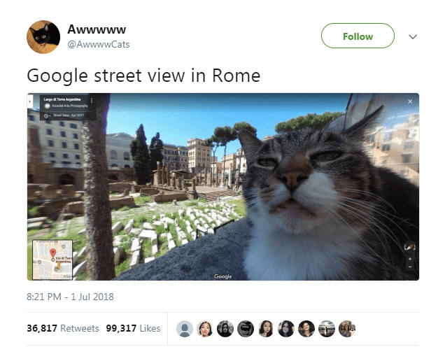 Text - Cat - Awwwww Follow @AwwwwCats Google street view in Rome Large d T Argent Roundd A P ah Ve d Torns Agntne Google Atan 8:21 PM 1 Jul 2018 36,817 Retweets 99,317 Likes
