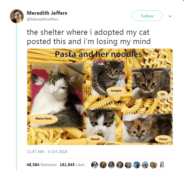 Text - Cat - Meredith Jeffers Follow @MeredithJeffers the shelter where i adopted my cat posted this and i'm losing my mind Pasta and her noodles Lasagna Ziti Mama Pasta Ravioli Penne 11:47 AM 3 Oct 2018 48,584 Retweets 161,645 Likes