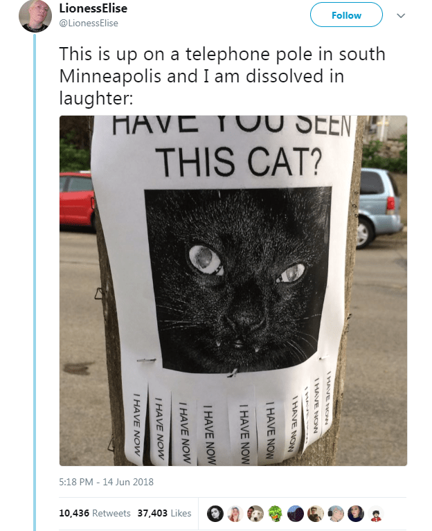 Text - Cat - LionessElise Follow @LionessElise This is up on a telephone pole in south Minneapolis and I am dissolved in laughter: HAVE TUU SEEN, THIS CAT? 5:18 PM - 14 Jun 2018 10,436 Retweets 37,403 Likes HAVE Now NON 3ANH T HAVE NOW I HAVE NOW I HAVE NOW I HAVE NOW I HAVE NOw I HAVE NOw
