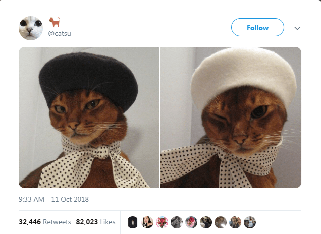 Text - Cat - Follow @catsu 9:33 AM - 11 Oct 2018 32,446 Retweets 82,023 Likes