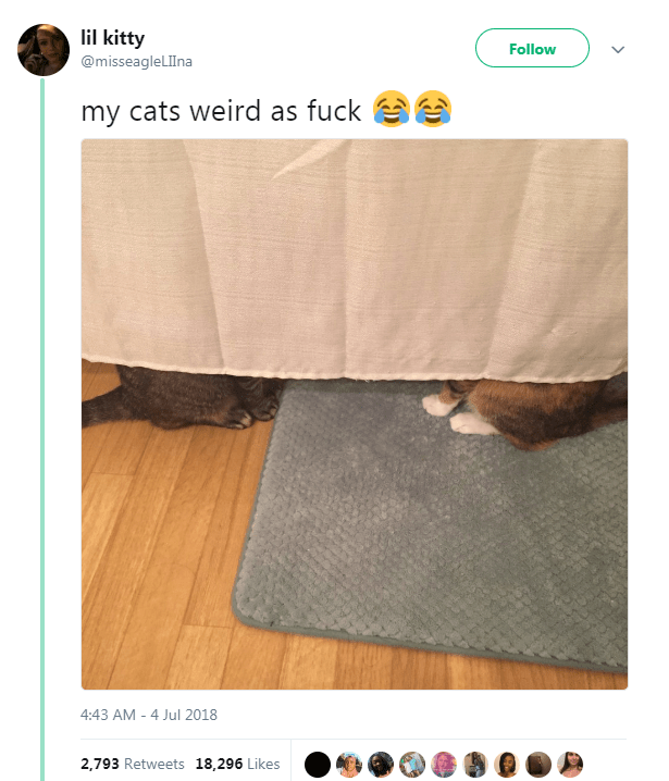 Text - Textile - lil kitty Follow @misseagleLIlna my cats weird as fuck 4:43 AM 4 Jul 2018 2,793 Retweets 18,296 Likes