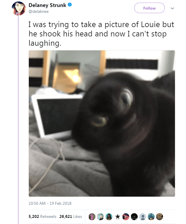 Text - Product - Delaney Strunk Follow @delaknee I was trying to take a picture of Louie but he shook his head and now I can't stop laughing. 10:50 AM 19 Feb 2018 5,202 Retweets 26,621 Likes