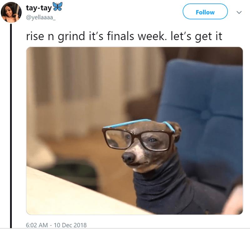 Glasses - tay-tay @yellaaaa_ Follow rise n grind it's finals week. let's get it 6:02 AM 10 Dec 2018