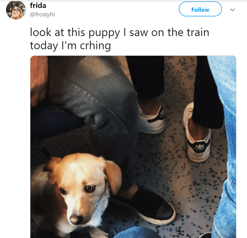 Dog - frida Follow @frostyfri look at this puppy I saw on the train today I'm crhing
