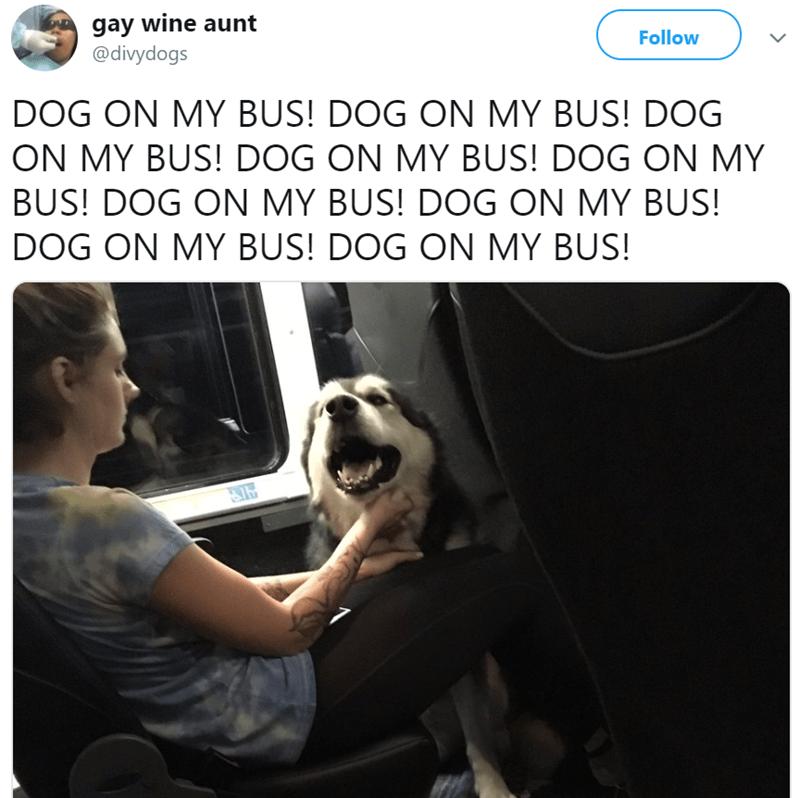 Text - gay wine aunt @divydogs Follow DOG ON MY BUS! DOG ON MY BUS! DOG ON MY BUS! DOG ON MY BUS! DOG ON MY BUS! DOG ON MY BUS! DOG ON MY BUS! DOG ON MY BUS! DOG ON MY BUS!