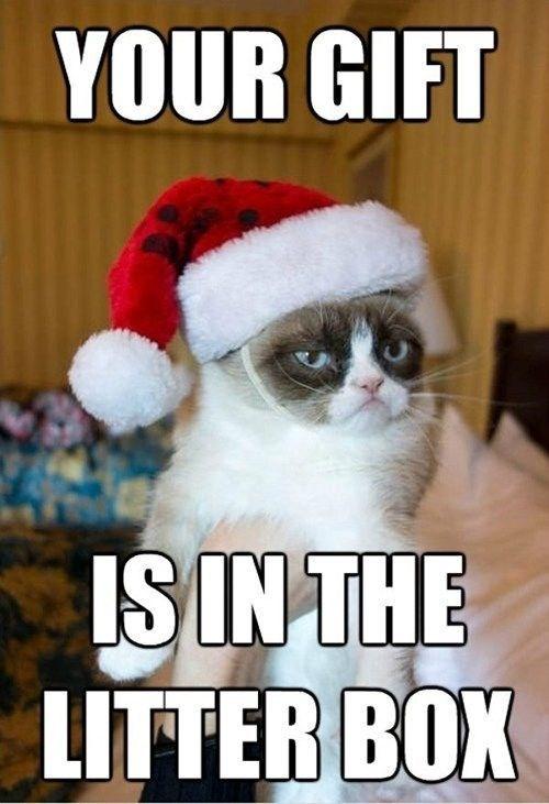 grumpy cat wearing a Santa hat