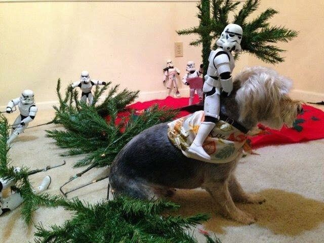 picture of Stormtrooper riding a dog while others are setting up a Christmas tree