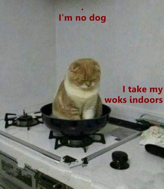 wok meme cat memes - 9247027968