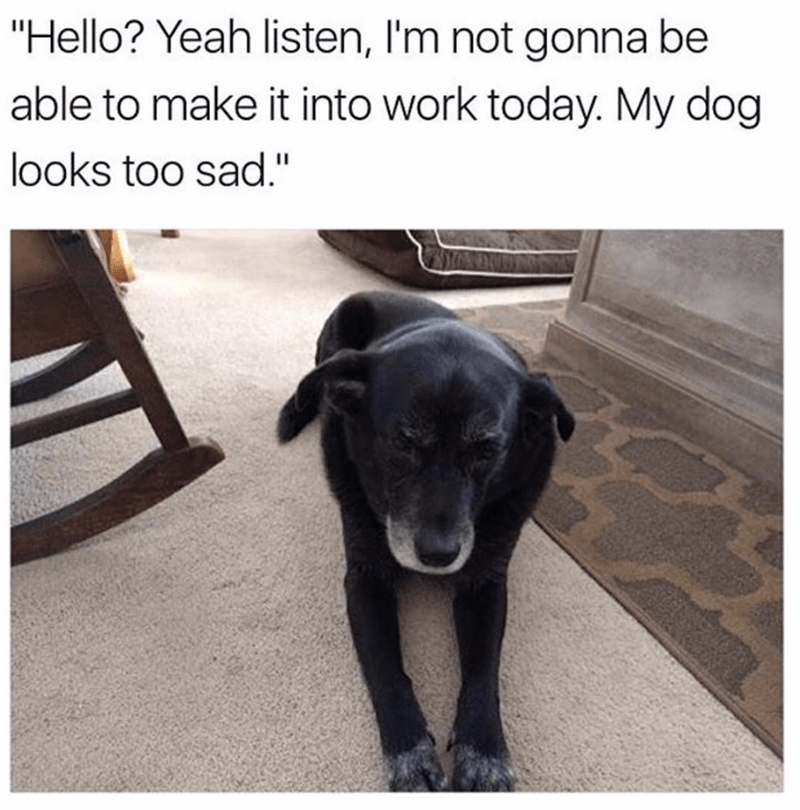 meme about missing work because of your dog