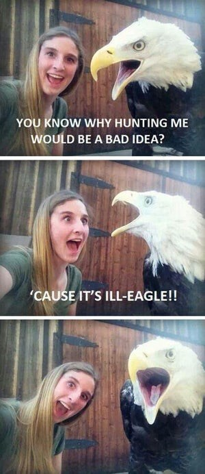 pic of an eagle sitting next to a girl