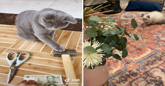 cats funny cute instagram