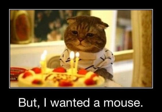 birthday meme of a cat looking sadly at a birthday cake