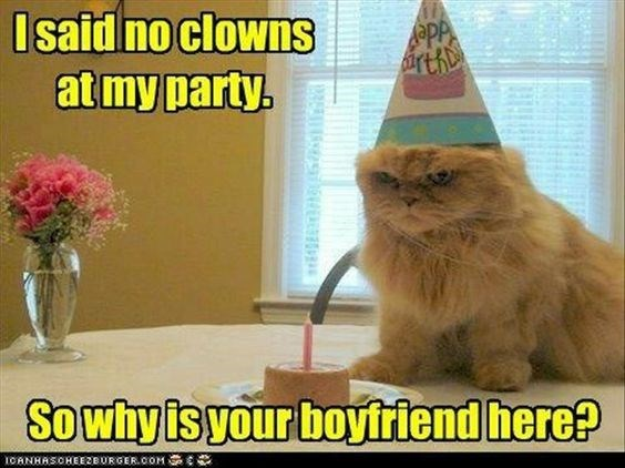 birthday meme of cat looking angry with his birthday