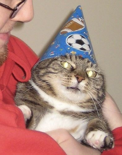 birthday meme of a cat wearing a birthday hat and sitting in a persons arms
