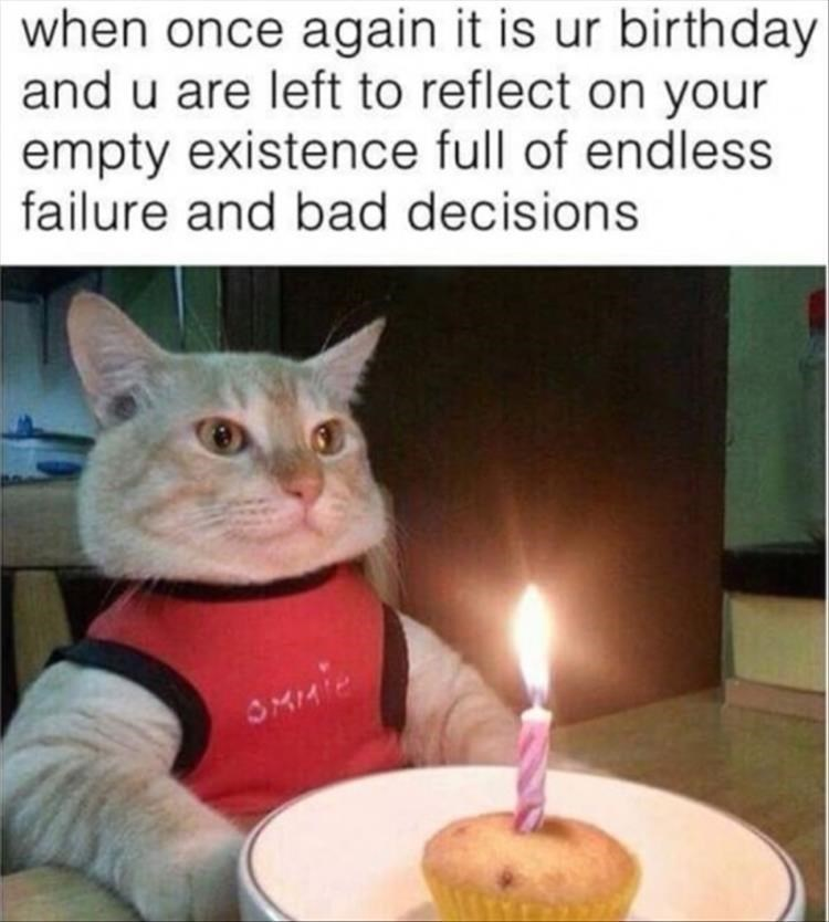 birthday meme of a cat sitting in front of a muffin with a candle in it and looking straight ahead