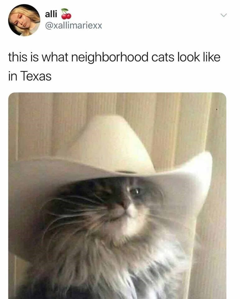 Cat - alli @xallimariexx this is what neighborhood cats look like in Texas