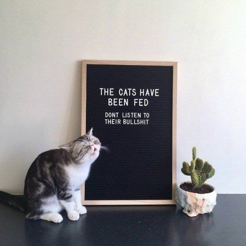 Cat - THE CATS HAVE BEEN FED DONT LISTEN TO THEIR BULLSHIT