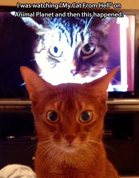Cat - was watching MyCat From HellP on Animal Planet and then this happened.