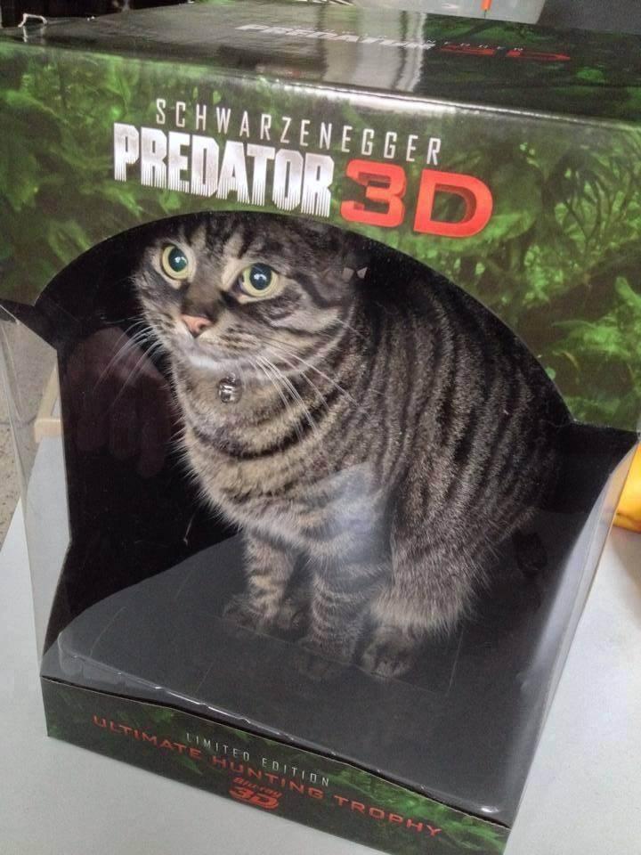 Cat - SCHWARZENEGGER PREDATOR 3D LIMITED EDITION ULTIMATE HUNTING TROPHY aerag 3D