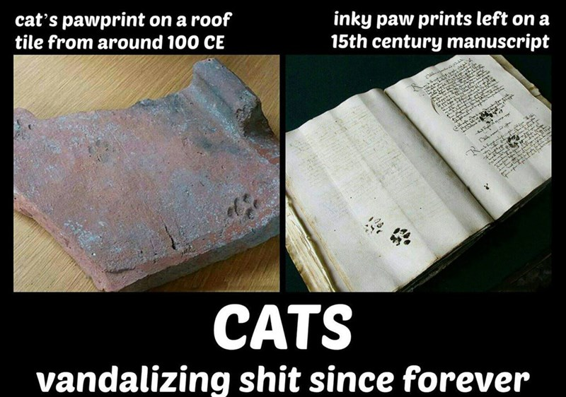 Text - cat's pawprint on a roof tile from around 100 CE inky paw prints left on a 15th century manuscript sSAUyLL a cy 2 mte e S ar CATS vandalizing shit since forever