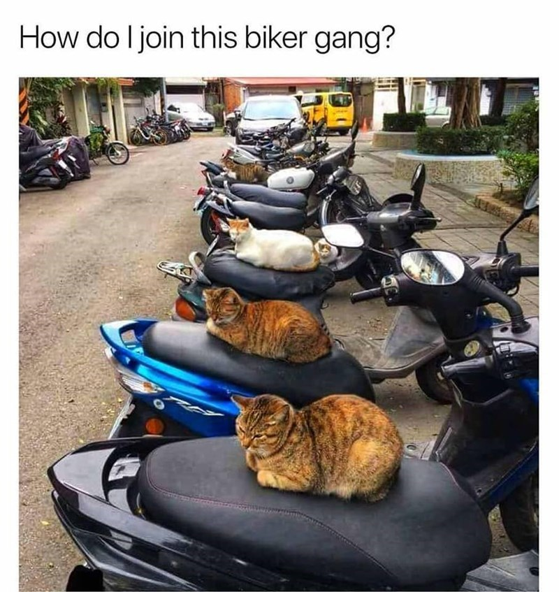 Motor vehicle - How do I join this biker gang?
