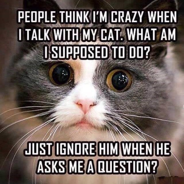 Cat - PEOPLE THINK I'M CRAZY WHEN ITALK WITH MY CAT. WHAT AM ISUPPOSED TO DO? JUST IGNORE HIM WHEN HE ASKS MEA QUESTION?