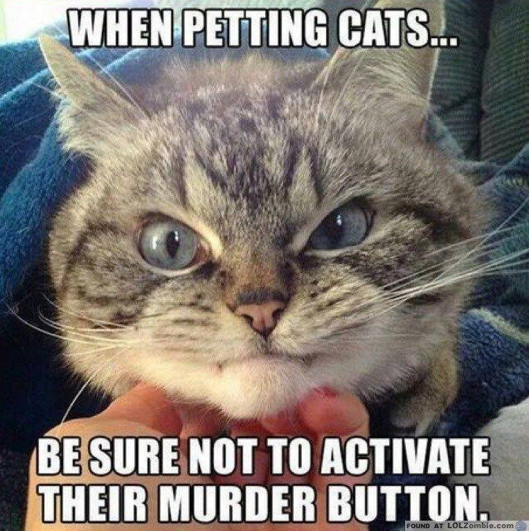 Photo caption - WHEN PETTING CATS. BE SURE NOT TO ACTIVATE THEIR MURDER BUTTON FOUND AT LOLZombie.com