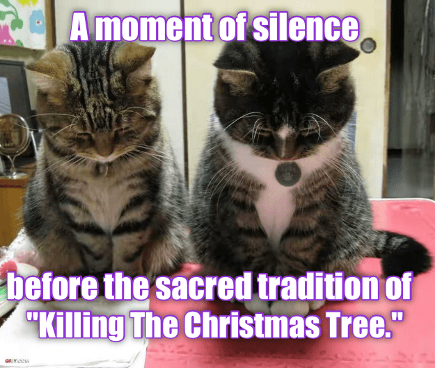 "Cat - A moment of silence before the sacred tradition of ""Killing The Christmas Tree."" GYOOM"
