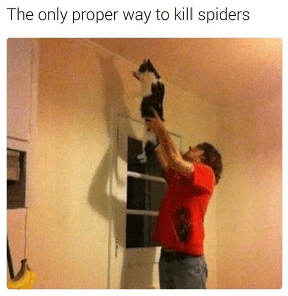 Wall - The only proper way to kill spiders