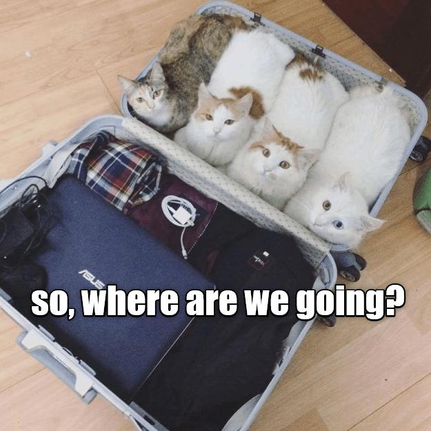 Bag - ASU SO, where are we going?