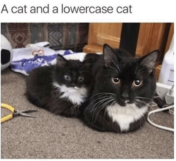Cat - A cat and a lowercase cat