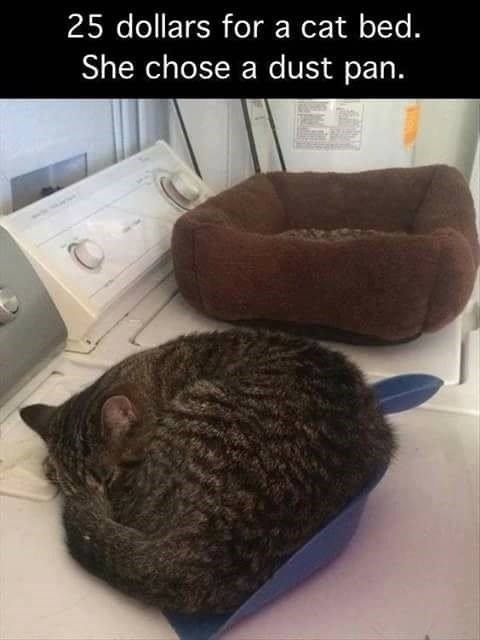Cat - 25 dollars for a cat bed. She chose a dust pan.