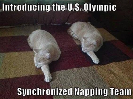 Dog - Introducing the U.S.Olympic Synchronized Napping Team
