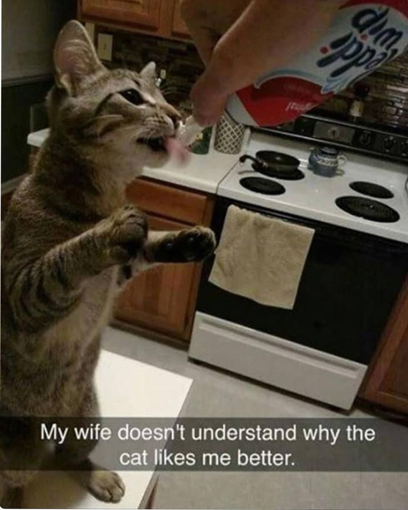 Cat - My wife doesn't understand why the cat likes me better.