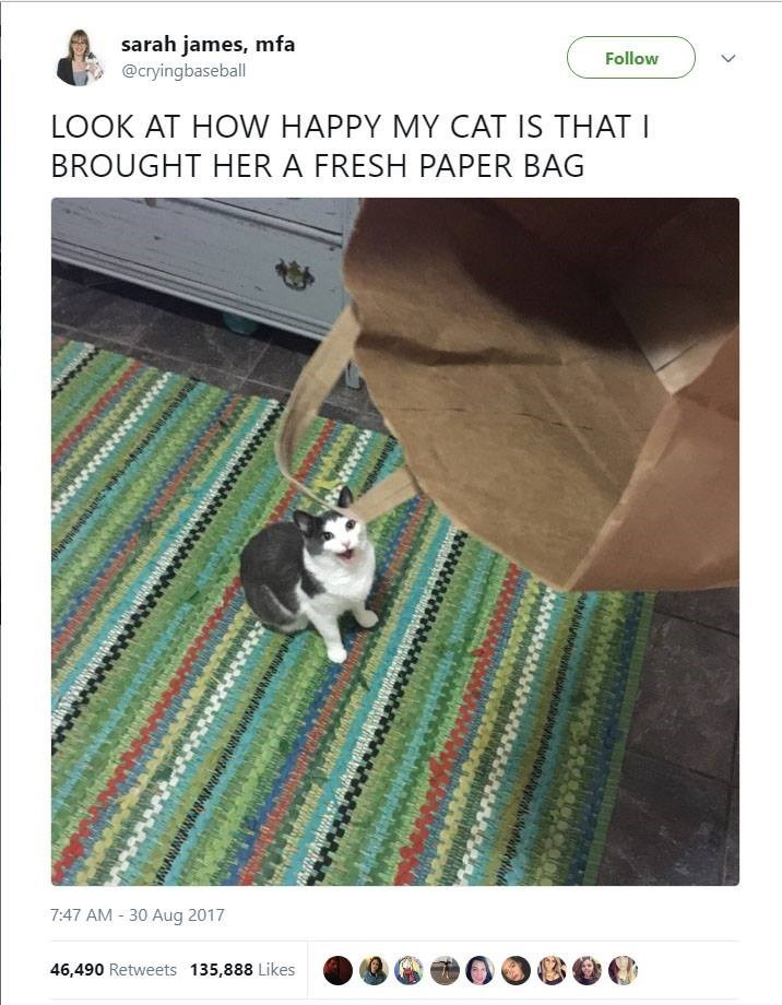 Photo caption - sarah james, mfa @cryingbaseball Follow LOOK AT HOW HAPPY MY CAT IS THAT I BROUGHT HER A FRESH PAPER BAG 7:47 AM 30 Aug 2017 46,490 Retweets 135,888 Likes wwwagmwrniRwanan