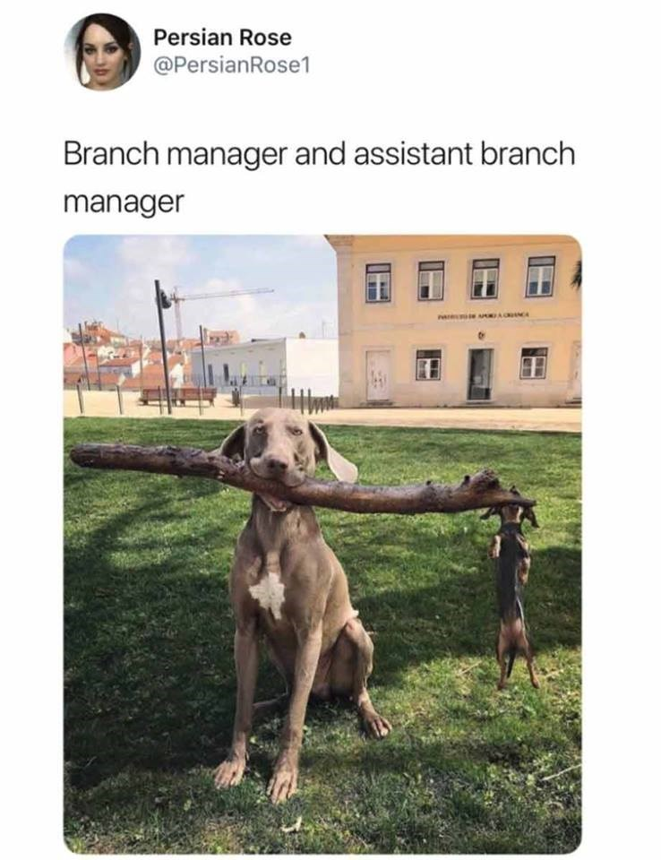 pic of a dog holding a large branch in a grassy area