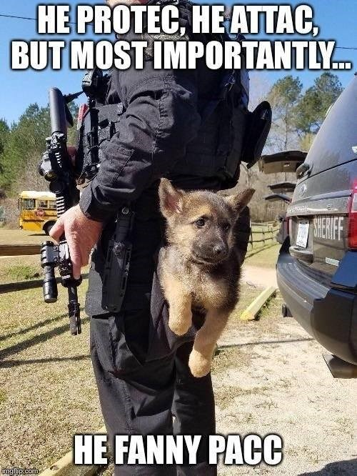 puppy sitting on the back of a police officers belt