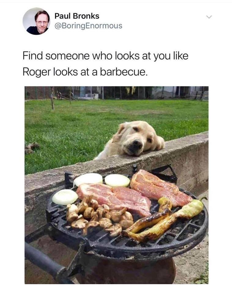 golden retriever staring at a BBQ