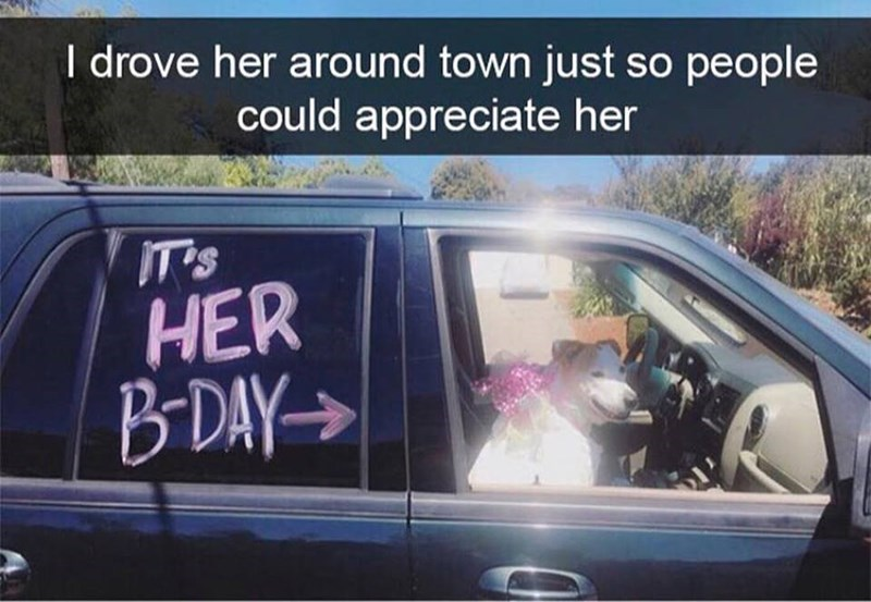 pic of a dog sitting inside a car next a sign that says its her birthday