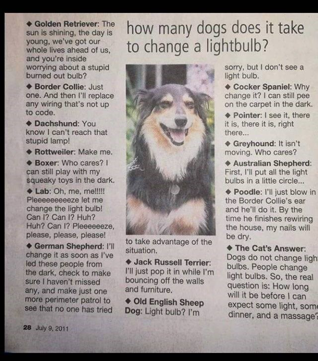 post of different scenarios on how a dog would change a lightbulb
