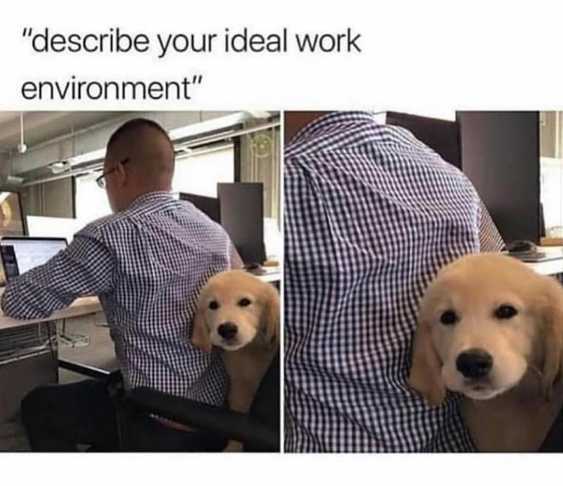 meme of a dog sitting behind a worker at an office
