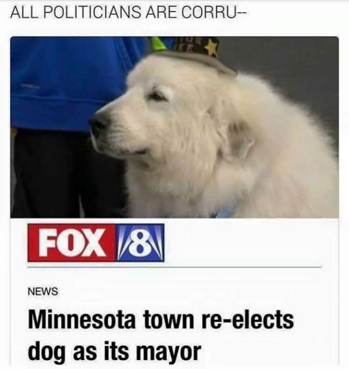 post about a dog who is elected as mayor in Minnesota
