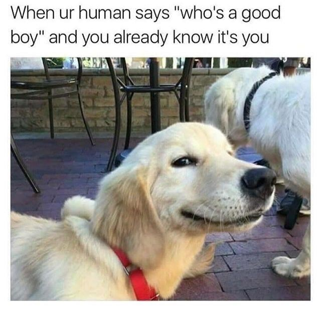 pic of a dog smiling at the camera